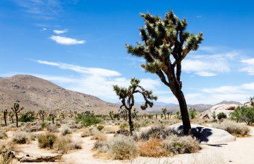 Desert in Joshua Tree National Park