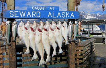 Seward Fish